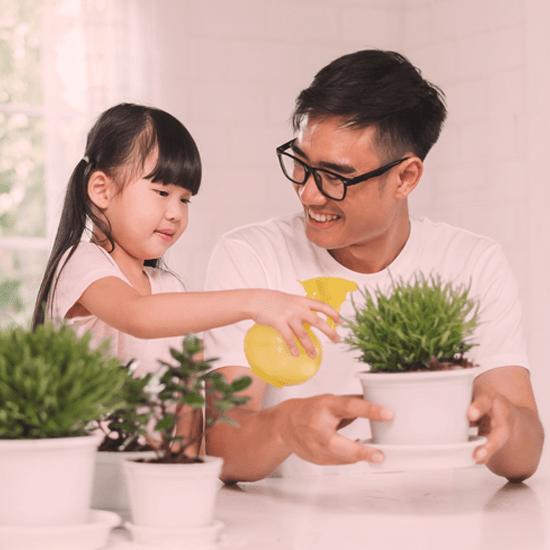 8 conseils pour soigner vos plantes d'intérieur